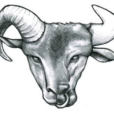 A ram's head that transforms into the head of a bull