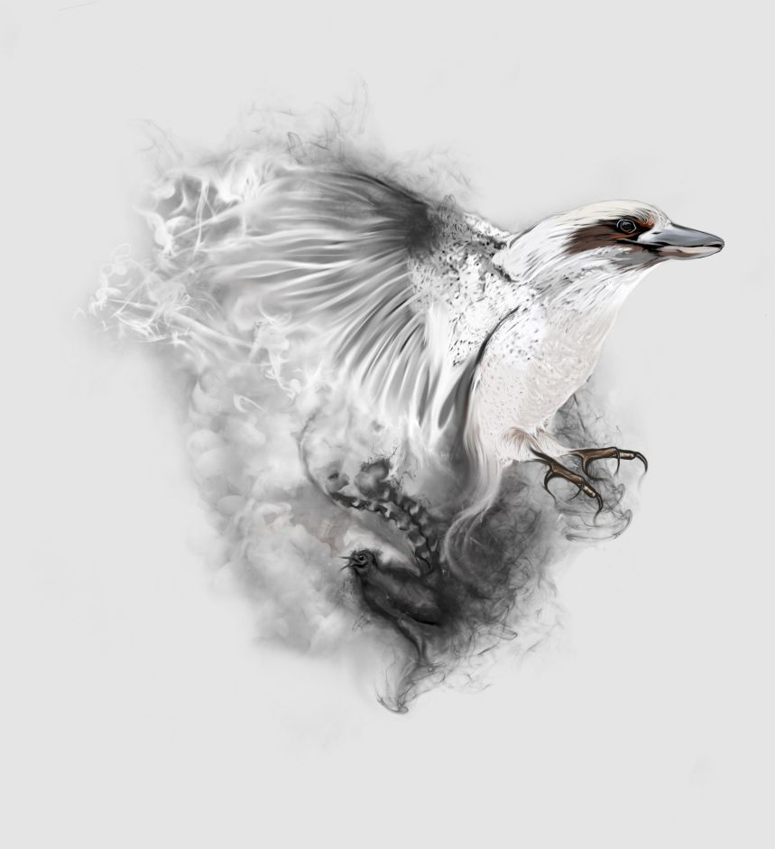 Kookaburra Flying With Smoky Effect